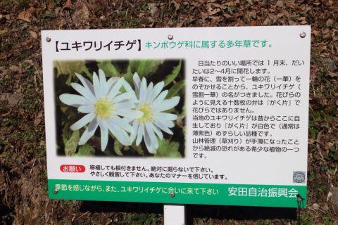 yasuda-yukiwari150308-02