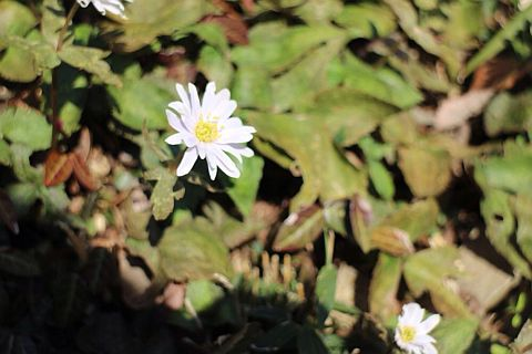yasuda-yukiwari150308-04