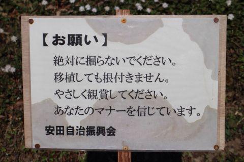 yasuda-yukiwari150308-09