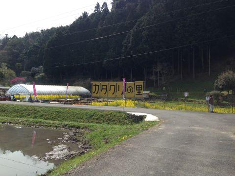 mukaihara-katakuri160409-01