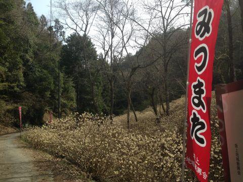mushidani160409-01