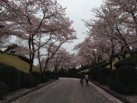 wakunaga-teien160410-02