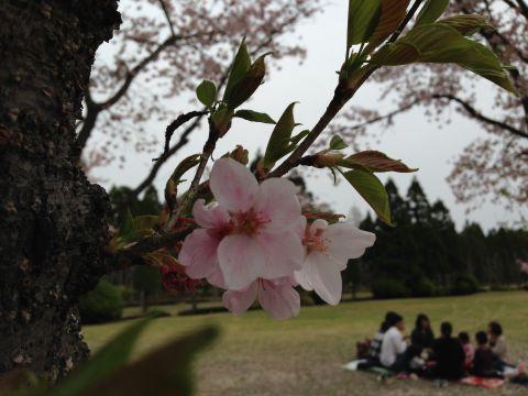 wakunaga-teien160410-04