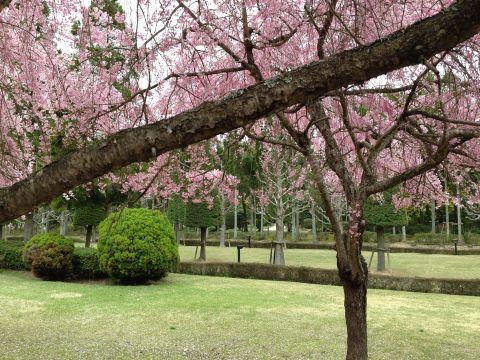 wakunaga-teien160410-07