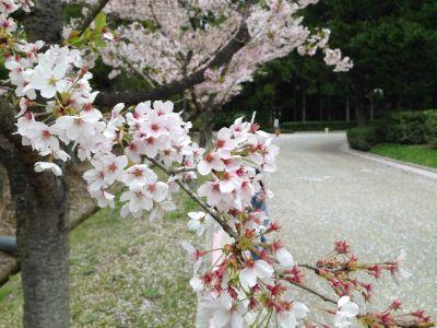 wakunaga-teien160410
